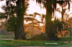 Caddo Lake State Park