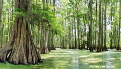 Caddo Lake Wildlife Management Area