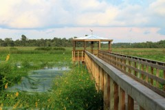 Cattail Marsh Scenic Wetlands
